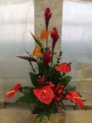 Ginger, Bird of Paradise, & Protea