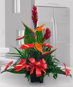 Ginger, Bird of Paradise, & Anthurium